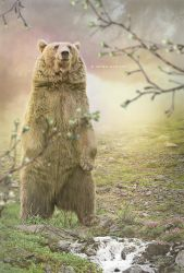 Calm bear by jhonismartins