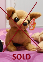 6ee9c900edc Ty Beanie Baby (Chihuahua) SOLD by Plushies-4-Sale on DeviantArt