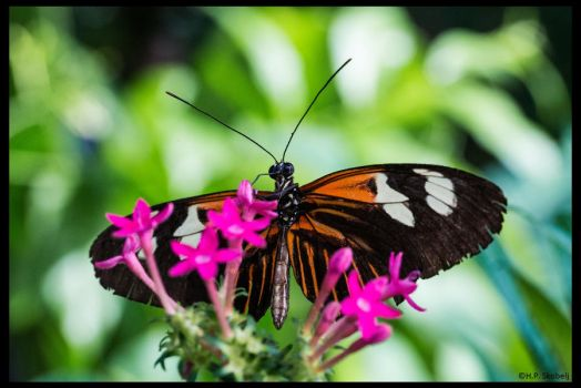 Butterfly 07 - other point of view by Blizzard1975