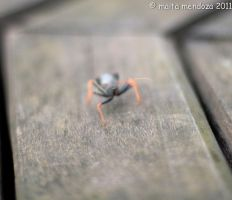 Buggy by maitaphotography