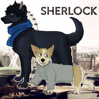 Sherlock And John by danyhund