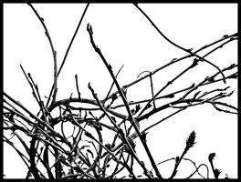 The dance of the twigs by eRiQ