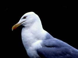 Simple Seagull by RebeccaFB