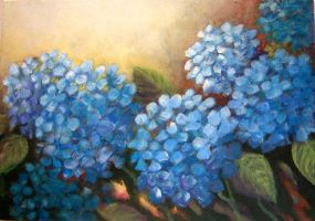 blue hydrangeas by Hydrangeas