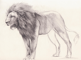 Lion sketch by xMits