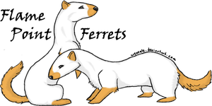 Flame Point Ferrets by dipnoi