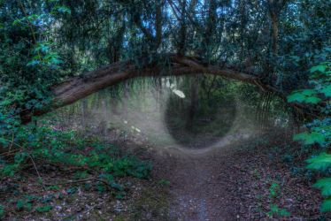 Eye of the forest by aglezerman