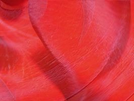 Rose Petal Texture Abstract by FantasyStock