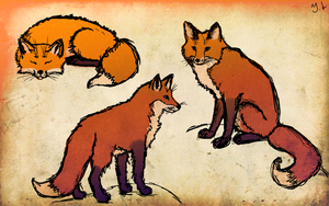 Foxes sketch by JuliaLisitsina