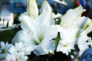 White Lilly by Alex-Brill