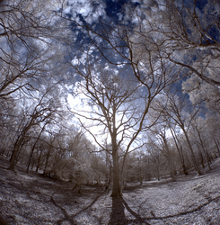 Ashridge trees in infrared by bmh1