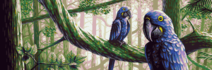 Hyacinth Macaws by Trick17