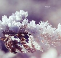 Dream of Winter by Angie-AgnieszkaB