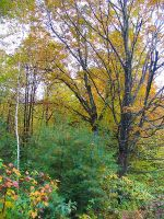 autumn foliage in Maine by sataikasia