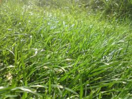 grass 3 by mossi889
