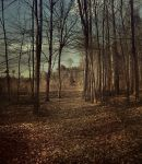 Autumn Forest by Justine1985