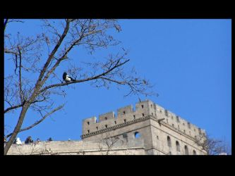 Bird at the Great Wall by Cerise-Angel
