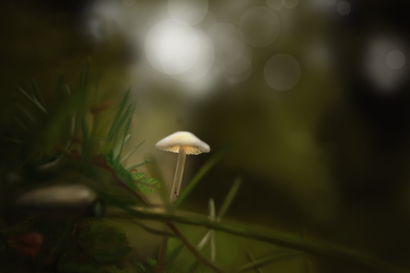 mushroom in the forest by Emeraldea