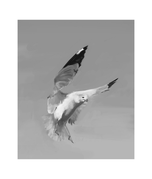 Seagull Study by Gemneroth