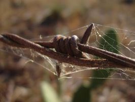 Barbed Wire by alexisw