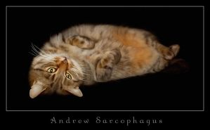 Andrew Sarcophagus by demonika