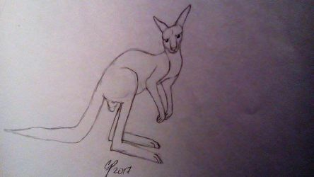 Another Kangaroo by Wolf--Prime