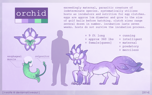 orchid [REF SHEET] by VCR-WOLFE