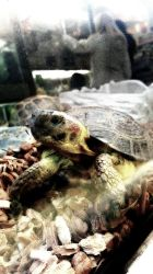 Turtle. by xKocicax