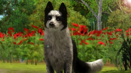 Sims 3 Pets - Thok los aan tey by SpirityTheDragon