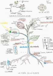 Plant life-cycle and biology [Cheat sheet] by AloiInTheSky