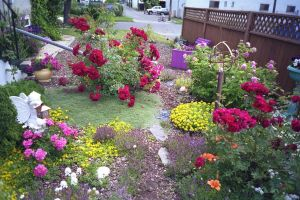 Our side yard 2 by fixinman