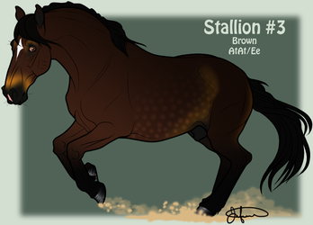 Mustang Stallion Adoption 3 by JNFerrigno