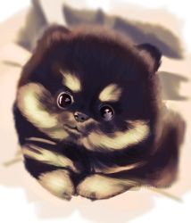 Puppy... by Neil03