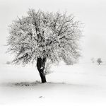 Tree by tree by etchepare