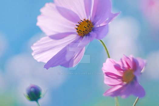 Cosmos by Addran