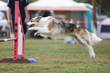Happy Dog Agility VII by Deliquesce-Flux