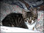 Cat on Bed Sofa by Spe4un