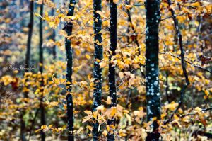 Fall whisper. by Phototubby