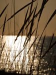 Sunset on Grasses by Snoopee63