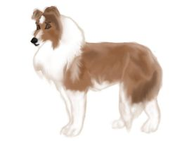 Rough Collie by serra20