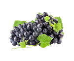 Black grapes on a transparent background by PRUSSIAART