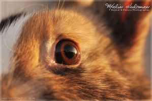 Eye of the rabbit.. by Pebels