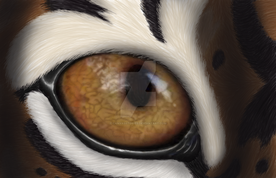 Tiger Eye by CanvasStories