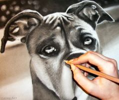 Boxer Charcoal Commission - WIP by secrets-of-the-pen