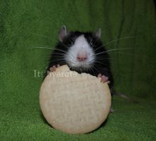 omnomnomnom by Itchys-rats