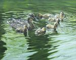 Mallard with Ducklings by CitizenOlek