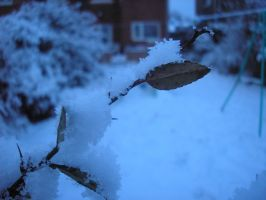 Snowy leaf by StivStock