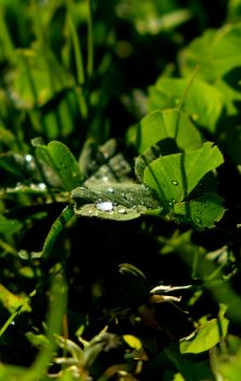 raindrops in sun by LoveForDetails