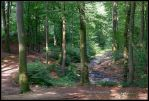 the little brook by Ingelore