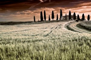 Val d'Orcia  19 by CitizenFresh